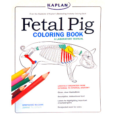 Cover Image For Coloring Book --- Fetal Pig